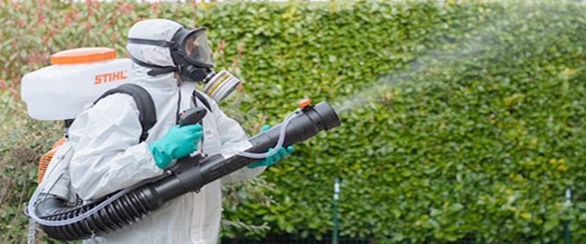 servicii de dezinsectie Baia Mare, dezinfectie si deratizare