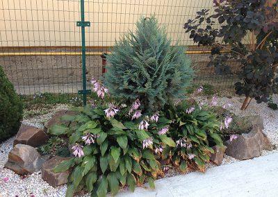 amenajare-curte-si-plantare-copacei