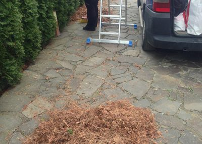 curatare-uscaturi-copaci-ornamentali