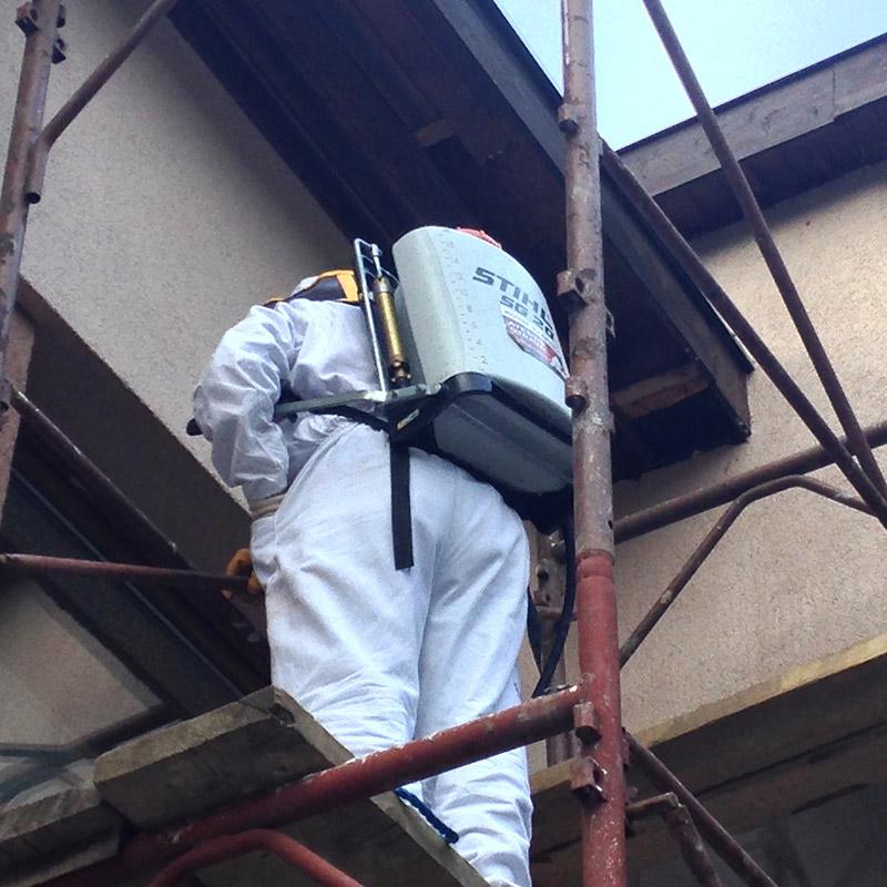 servicii de dezinsctie Baia Mare, dezinfectie si deratizare