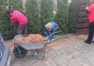 intretinere-arbori-si-curatare-copaci