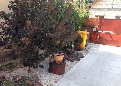 plantare-copaci-ornamentali